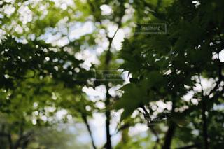 緑の写真・画像素材[4411866]
