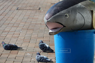 鳩の写真・画像素材[4491196]