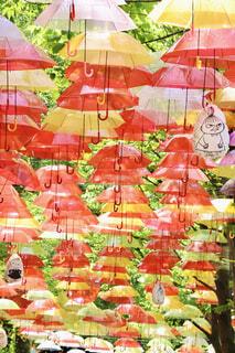 傘の写真・画像素材[4605567]