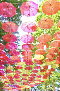 傘の写真・画像素材[4605591]