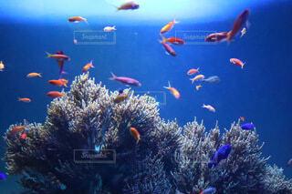 珊瑚礁の写真・画像素材[4708094]