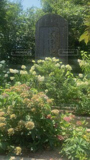 自然,風景,花,森林,屋外,景色,樹木,寺院,寺,墓,草木,墓地,ガーデン,フローラ