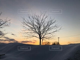 自然,風景,空,朝日,きれい,樹木,正月,お正月,日の出,新年,初日の出