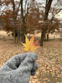 秋っぽいけど冬。の写真・画像素材[4076412]