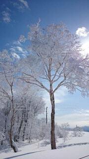 自然,風景,空,冬,雪,屋外,山,樹木,霜,冷たい,草木,冷凍