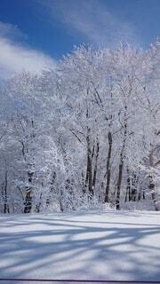 自然,風景,空,冬,雪,屋外,雲,山,霜,冷たい,草木,冷凍