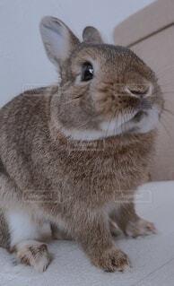 動物,うさぎ,屋内,かわいい,ウサギ,バニー