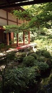自然,庭,屋外,樹木,庭園,草木