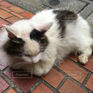 猫の写真・画像素材[208065]