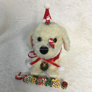 犬の写真・画像素材[271857]