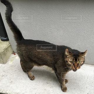 猫の写真・画像素材[288615]