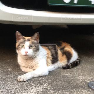 猫 - No.288616