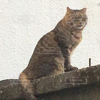 猫 - No.288617