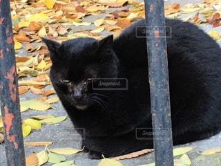 猫の写真・画像素材[288627]