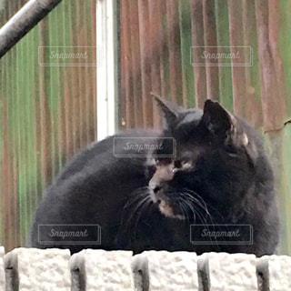 猫の写真・画像素材[288629]