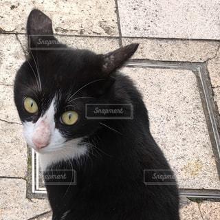猫の写真・画像素材[289056]