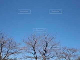 自然,空,木,屋外,樹木