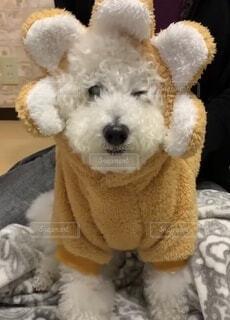 花の服を着た犬の写真・画像素材[4119625]