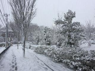 雪に覆われた木の写真・画像素材[4138873]