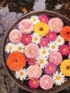 花の写真・画像素材[4172771]