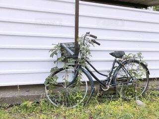 建物,自転車,屋外,森,草,家,タイヤ,ジブリ,駐輪場,蔦,車両,ホイール,チャリ,ツタ,放置,粗大ゴミ,駐輪,絡まる,置きっぱなし,ジブリ映画,陸上車両,自転車のホイール