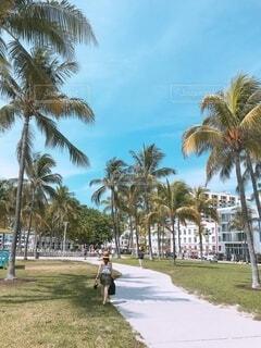 女性,海,空,公園,海水浴,屋外,ビーチ,水着,アメリカ,女子,草,樹木,旅行,旅,ヤシの木,マイアミ,リゾート,草木,パーム,ヤシ目