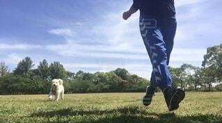 犬と一緒に走る女性の写真・画像素材[4221092]