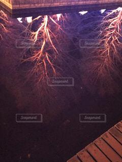 木,花火,池,鏡,イルミネーション,明るい,景観