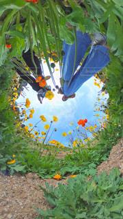 花の写真・画像素材[552356]