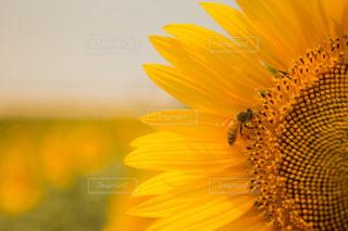 花の写真・画像素材[597003]