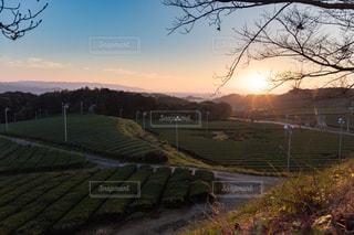 八女の大茶畑の写真・画像素材[851300]