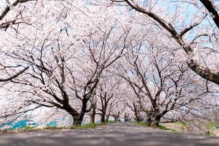 公園の木の写真・画像素材[1122240]