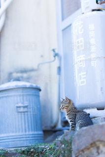 建物の上に座っている猫の写真・画像素材[1256034]