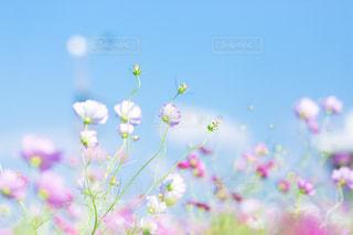 近くの花のアップの写真・画像素材[1485954]
