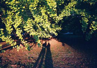 木の隣の泥道の写真・画像素材[2438006]