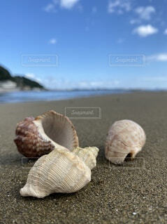 砂浜で拾った貝殻たちの写真・画像素材[4025009]