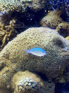 動物,魚,熱帯魚,水族館,水中,ベージュ,珊瑚,珊瑚礁,白色,水槽,小魚,青色,魚類,海水魚,コーラル,海洋生物学,生命体