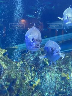 海,動物,魚,水族館,泳ぐ,仲良し,水中,三重,群れ,青色,鳥羽,海底,鳥羽水族館,大水槽,銀色,海洋生物学