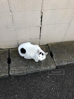 猫,動物,屋外,白,黒,地面
