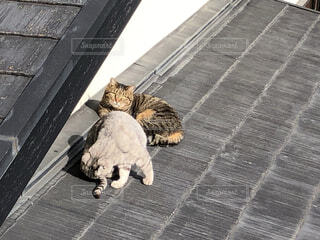 猫,動物,屋外