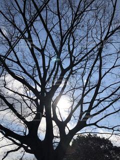空,屋外,樹木,草木,日中