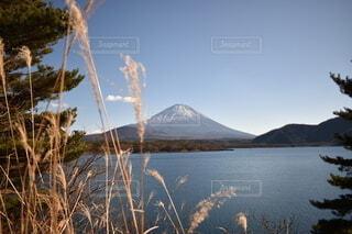 自然,空,富士山,水面,山,景色,本栖湖
