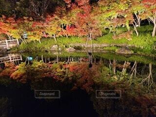 秋,紅葉,湖,水面,反射,草,樹木