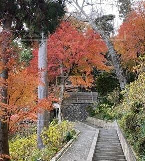 風景,秋,屋外,景色,樹木,カエデ,長谷寺、眺望の道、遊歩道
