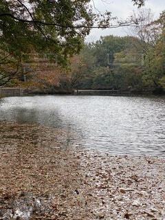 自然,秋,屋外,赤,葉,樹木,湖、震生湖、静けさ、静寂、地震、釣り、バス