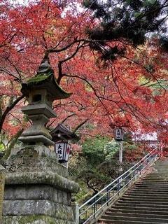 自然,秋,屋外,階段,赤,葉,樹木,灯籠,カエデの葉,シルバーメープル,大雄山、最乗寺、紅葉