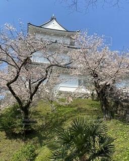 風景,空,花,春,屋外,景色,樹木,小田原、城、桜