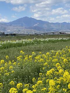 自然,風景,空,屋外,白,雲,川,山,景色,樹木,散歩道,畑,大山,草木,菜の花、黄色