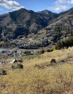 自然,風景,空,屋外,山,樹木,草木,松田町,山腹,ローバイ,やどりぎ、寄