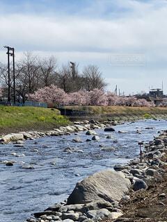 自然,風景,空,花,屋外,雲,水面,景色,岩,川、桜、,春めき桜、狩川、川沿い